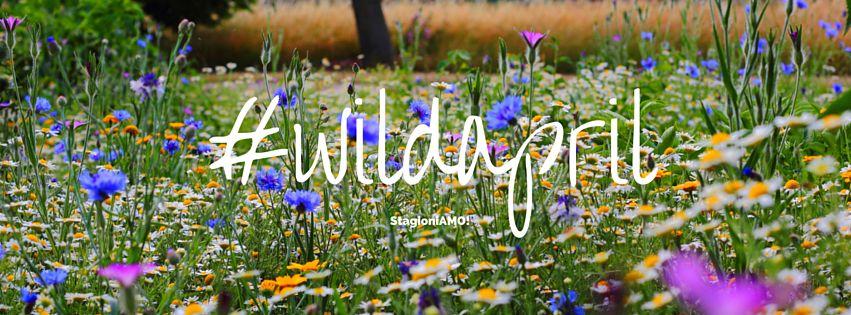 wild april aprile a base di erbe spontanee per StagioniAMO